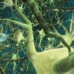 neurons800x600