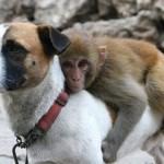 1301508066_animal_friendship_20