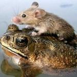 animal_friendship_24