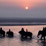 02 sonpur-india_elephants-sonpur