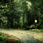 03 jungle