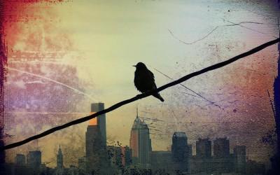 Птичка на проводе, или вольное эссе о потребительской духовности